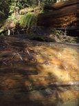 Redwood03fw