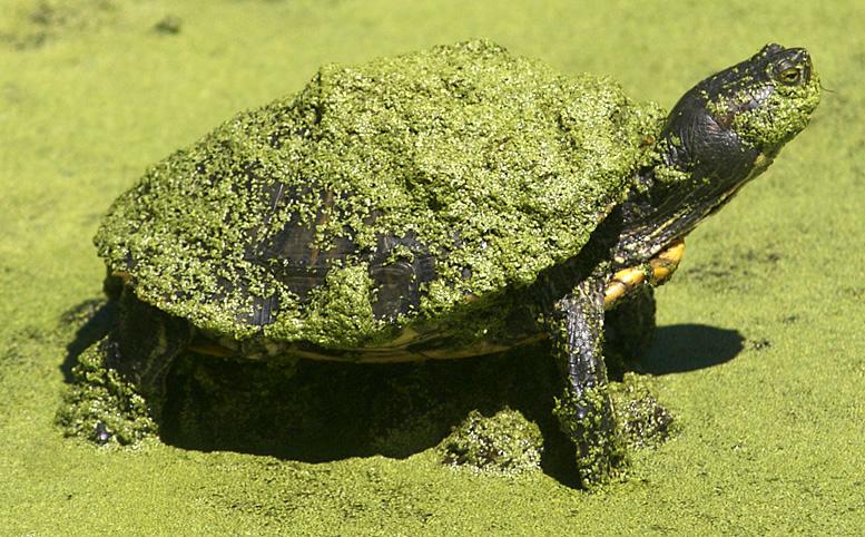 Turtlehappy