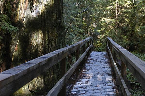 Redwood07fw
