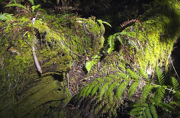 Redwood08fw