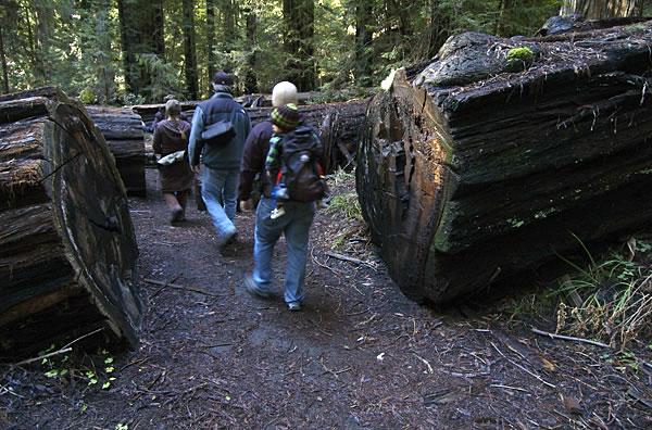 Redwood11fw